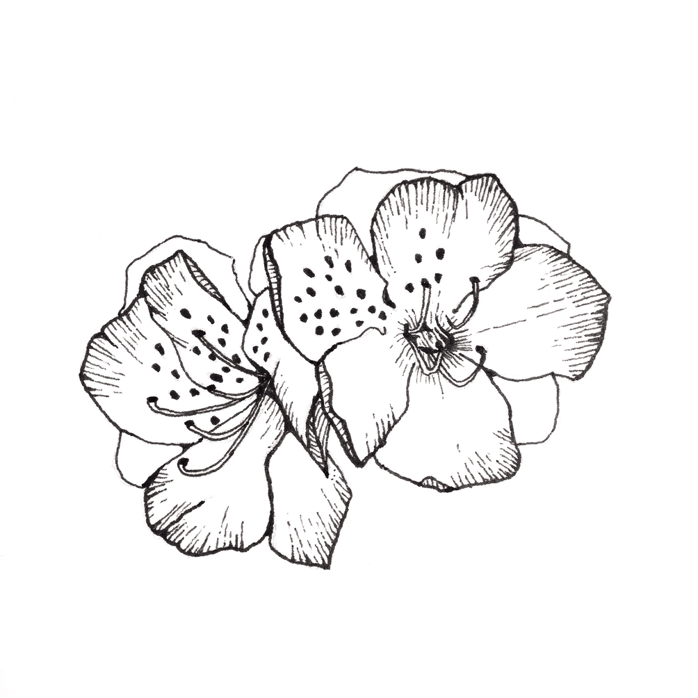 February Flower Drawing Challenge