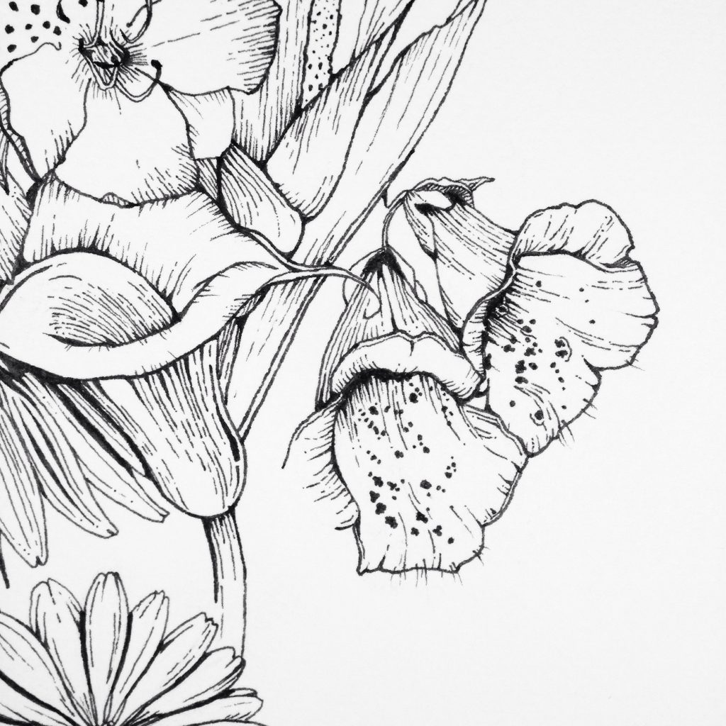 Floxglove flower ink illustration