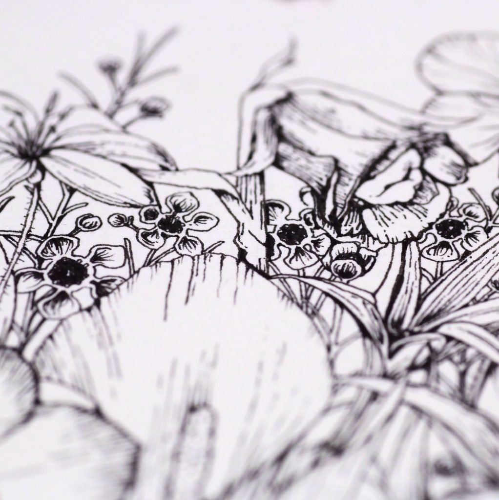 Wax Flower ink illustration
